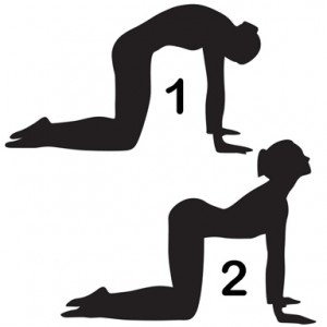 Yoga Poses-Vedicgrace.in
